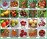 Tomaten Set 2 :: Historische alte Tomatensorten 20 Arten je 10 Samen Fleischtomate Cherrytomate Cockteiltomate Tomate Mix Paket Mischung Rarität