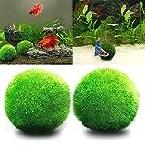 angju - [Bolas de musgo] para acuario para plantas vivas, bola de musgo ecológica, adorno para pecera