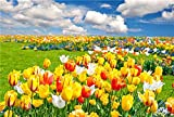 Cuadro sobre Lienzo – Tulipán Flor Pradera Cielo Azul Naturaleza Fotografía Pared Impresións – 90X60 cm