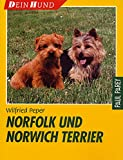 Norfolk und Norwich Terrier