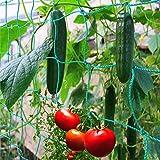 GardenGloss Ranknetz mit großer Maschenweite für besonders ertragreiche Ernte von Gurken, Tomaten und anderen Gemüsepflanzen – Größe: 2,50 x 2m