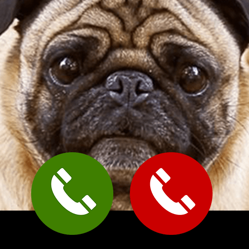 Fake Call From Cute Pug And Puppies Pug Amazon In Appstore For Android