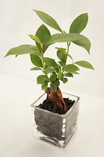 観葉植物で癒しをプレゼント