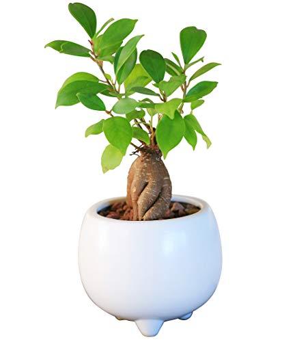 観葉植物は3000円でプレゼント可能なギフト
