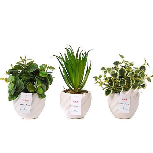 観葉植物を贈り癒しの空間に変える