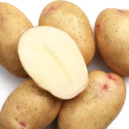 じゃがいも 種芋 はるか 1kg ジャガイモ