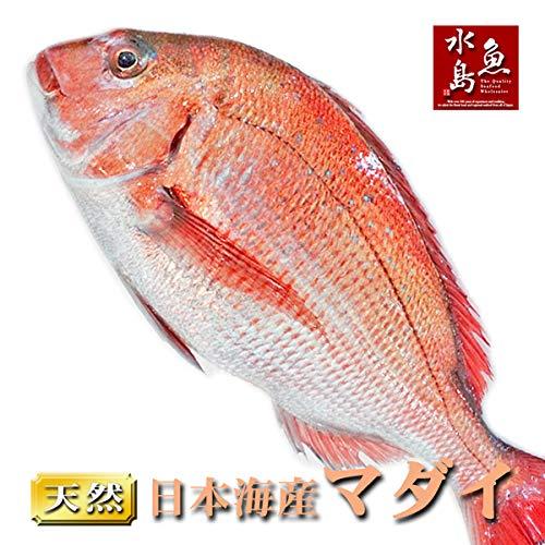 魚水島 天然真鯛 マダイ 桜鯛 日本海産 4.5~4.9キロ物