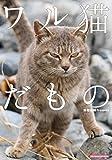 ワル猫だもの SUNMAGAZINE