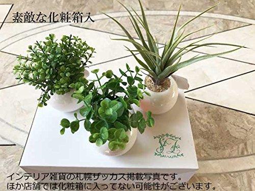 ユーカリの観葉植物はプレゼントにおすすめ