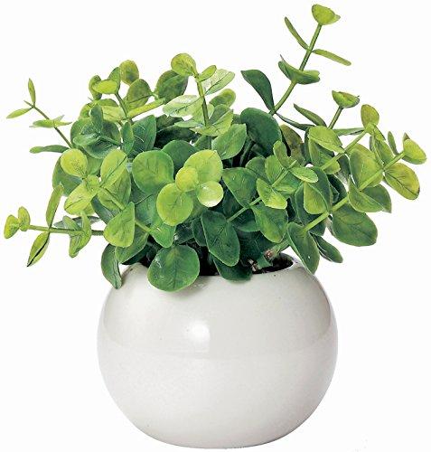 ユーカリの観葉植物を誕生日や記念日にプレゼント