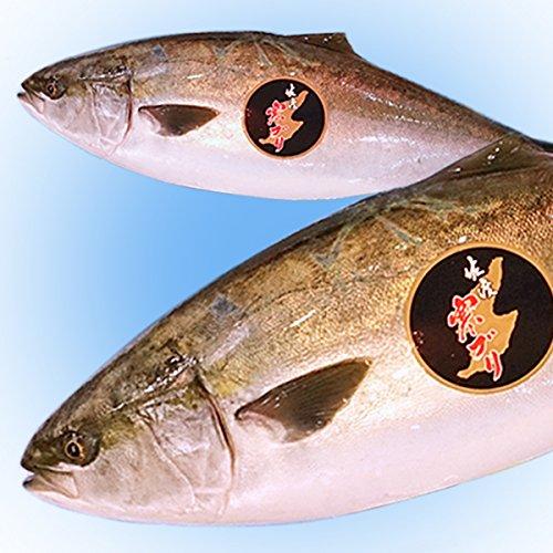 魚水島 天然 寒ブリ「佐渡 寒ぶり」3kg以上4kg未満 一尾丸もの