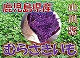 鹿児島県産 むらさきいも 紫芋 「山川紫」 1箱:約5kg サイズ:Sサイズ以上の混合 新芋(2018年産)