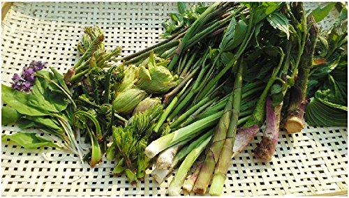 【国産 天然】山菜セット 3kg 数種類を一度に欲しい方!☆ミシュラン3つ星御用達店☆採りたてを産直。山菜三昧に最適