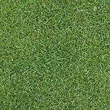 芝の種:ケンタッキーブルーグラスブルーノート1kg[暑さに強く日陰にも向く タネ 40平米分] ノーブランド品