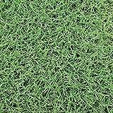 【種 2kg】 バミューダグラス リビエラ 芝生用 緑肥 [播種期:4~7月] 雪印種苗 米S代不