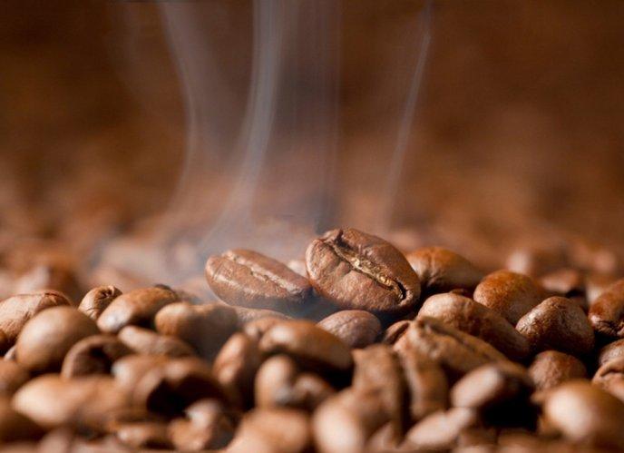 「コーヒー豆ルーツ」の画像検索結果