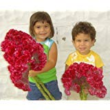Giant Red Crested Cockscomb Celosia 300+ Seeds Rare Huge Flowers in One Season