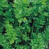 Herb Seeds - Lovage - 300 Seeds