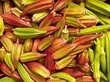 10 Seeds Hill Country Red Okra , Bhindi , Gumbo , Abelmoschus Esculentus, Texas Heirloom!
