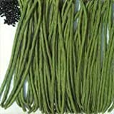 Purple Chinese Wisteria sinensis 5 seeds ez grow bonsai Fragrant