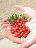 Red Currant TOMATO 25+ Seeds