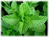 Mint Seeds 3 Packets Chocolate, Peppermint, Mojito