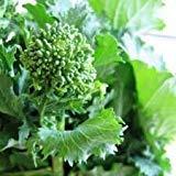 Broccoli Rabe Seeds (CERTIFIED USDA ORGANIC) by Stonysoil Seed Company