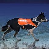 Illumiseen LED Dog Vest   Orange Safety Jacket with Reflective Strips & USB Rechargeable LED Lights   Increase Dog's Visibility When Walking, Running, Training Outdoors (Large, Orange)