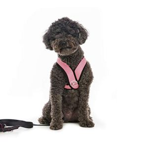 Gooby – Comfort X Head-In Harness, Choke Free Small Dog Harness with Micro Suede Trimming and Patented X Frame