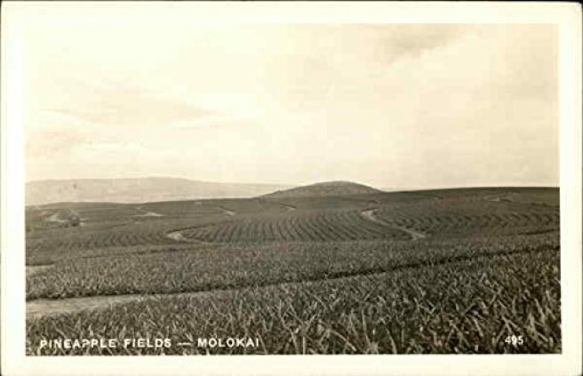 Image result for molokai pineapple