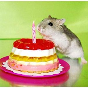 Jigsaw Puzzle for Adults 1000 Piece – Dwarf Hamster Birthday Cake – DIY Wooden Set Unique Gift Home Decor Adult Children s Educational 75x50CM 416Gyimz6hL