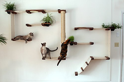 CatastrophiCreations Cat Mod Garden Complex Handcrafted Wall Mounted Cat Tree Shelves with Planter for Cat Grass, English Chestnut/Black, One Size