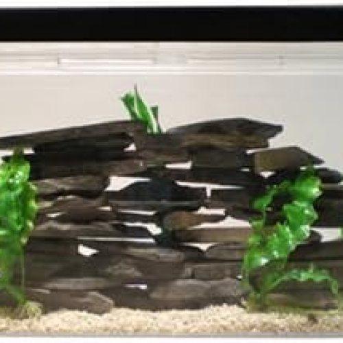 SeaClear 30 gal Show Acrylic Aquarium