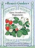 Strawberry, Alpine, Mignonette