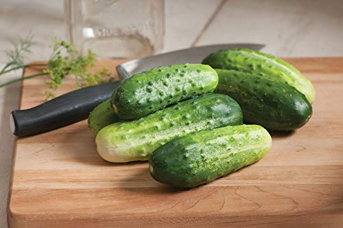 David's Garden Seeds Cucumber Pickling H-19 Little Leaf 3311 (Green) 50 Non-GMO, Open Pollinated Seeds