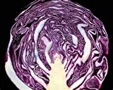 OrOlam Cabbage Red Acre Organic Non GMO 250 Seeds