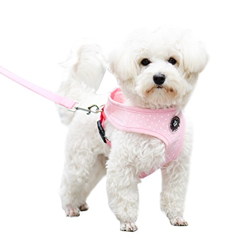EXPAWLORER Soft Mesh Polka Dots Dog Harness with Matching Leash 1