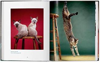 Walter-Chandoha-Cats-Photographs-1942-2018-Multilingual-Edition