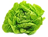 Buttercrunch Lettuce Seeds - Non-GMO - 5 grams, approximately 2,850 seeds