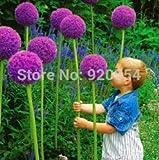 Jaysseeds™ Heirloom Scarlet Nantes Carrot 200 Seeds #818 Item Upc#650348691745