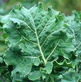 Kale Premier Great Heirloom Vegetable By Seed Kingdom 1,000 Seeds