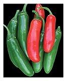 David's Garden Seeds Pepper Serrano Tampiqueno SL1413 (Red) 50 Non-GMO, Heirloom Seeds