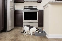PetSafe-Drinkwell-Platinum-or-1-Gallon-Pet-Water-Fountain-Drinking-Fountain-for-Cats-and-Small-to-Medium-Dogs