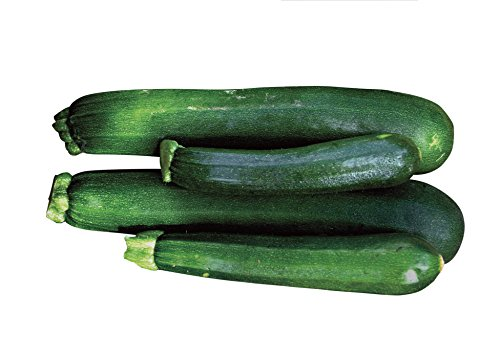 Burpee Black Beauty Zucchini Summer Squash Seeds 100 seeds