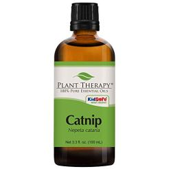Plant-Therapy-Catnip-Essential-Oil-100-Pure-Undiluted-Natural-Aromatherapy-Therapeutic-Grade-100-milliliter-33-ounce