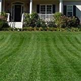 Outsidepride Combat Extreme Turf Type Fescue & Kentucky Bluegrass Grass Seed For Northern Zone - 10 LB