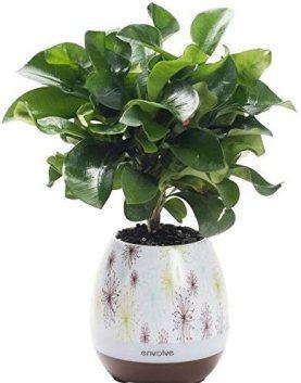 Music Flower pot, Envolve LED smart touch Music vaso di fiori con altoparlante Bluetooth wireless, luce notturna multicolore, Play piano musica su una vera pianta con luci LED colorati (senza pianta)