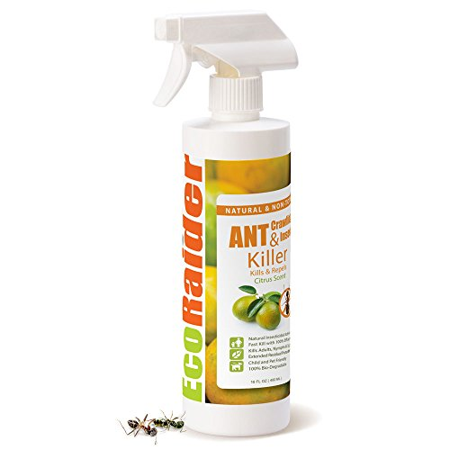 EcoRaider Ant Killer & Crawling Insect Killer (Citrus Scent) 16 OZ, Natural & Non-Toxic