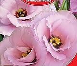 Eustoma / Lisianthus grandiflorum Florida Pink F1 Flower Seeds