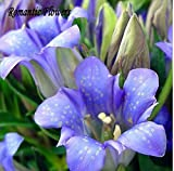 Mr. seeds-100 Seeds / Pack ,New Home Garden Plant Stemless Gentian Gentiana Acaulis Herb Seeds